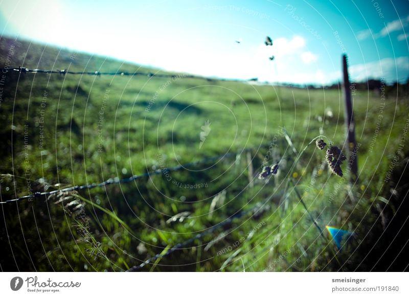 stacheldraht Natur Himmel Sonne grün blau Pflanze Sommer Wiese Gras Feld Sicherheit Schutz Landwirtschaft Weide Zaun Schönes Wetter