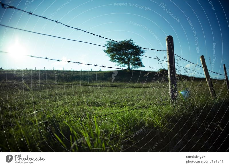 stacheldraht mit baum Natur Himmel Baum Sonne Pflanze Sommer Ferien & Urlaub & Reisen Wiese Gras Landschaft Feld Ordnung Idylle Grenze Weide Zaun