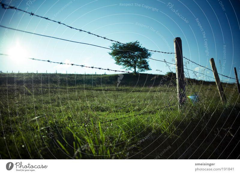 stacheldraht mit baum Natur Landschaft Pflanze Himmel Wolkenloser Himmel Sonne Sommer Schönes Wetter Baum Gras Grünpflanze Wiese Feld Ferien & Urlaub & Reisen