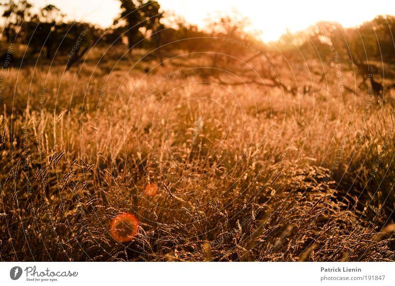 summer evening Sommer Umwelt Natur Landschaft Pflanze Sträucher Wildpflanze Wiese Wüste Stimmung heiß Outback Sonnenuntergang Farbfoto Außenaufnahme Abend Licht