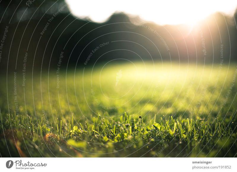garten Natur Pflanze Sonne Schönes Wetter Gras Garten Park Wiese frisch nachhaltig natürlich positiv Wärme Zufriedenheit Lebensfreude Frühlingsgefühle