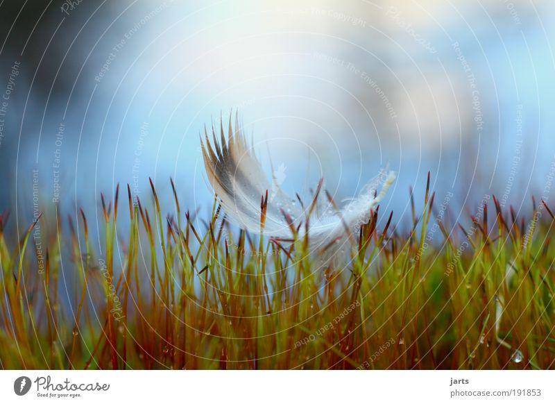 schweben Natur ruhig Freiheit Gras träumen Vogel elegant fliegen frei Feder Frieden Gelassenheit leicht Schweben Makroaufnahme Moos