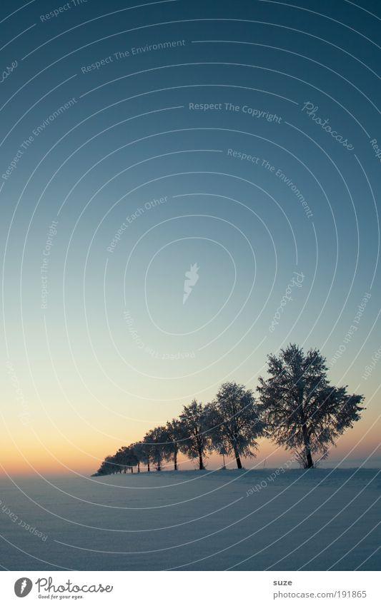 Winterlichter Umwelt Natur Landschaft Pflanze Urelemente Himmel Wolkenloser Himmel Horizont Nebel Eis Frost Schnee Baum Wege & Pfade außergewöhnlich dunkel