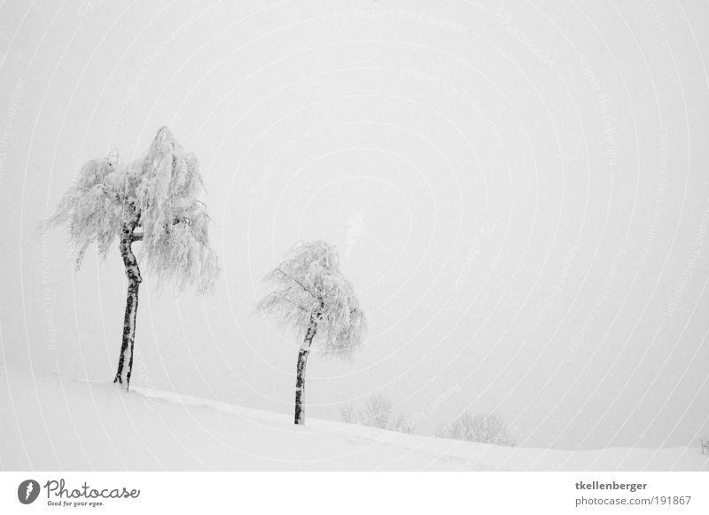 winter never ends III Natur weiß Baum Wolken Winter schwarz kalt Schnee grau Eis gehen Nebel trist Urelemente frieren genießen