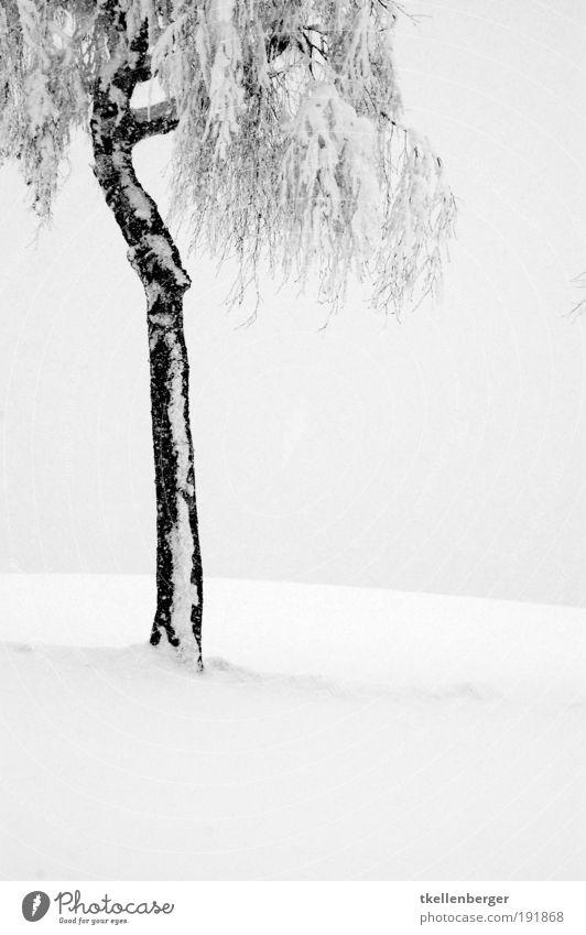 winter never ends IV Natur Pflanze Wolken Winter Klima Nebel Eis Frost Schnee Baum Birke Park frieren stehen warten dünn frei kalt grau schwarz Erholung ruhig