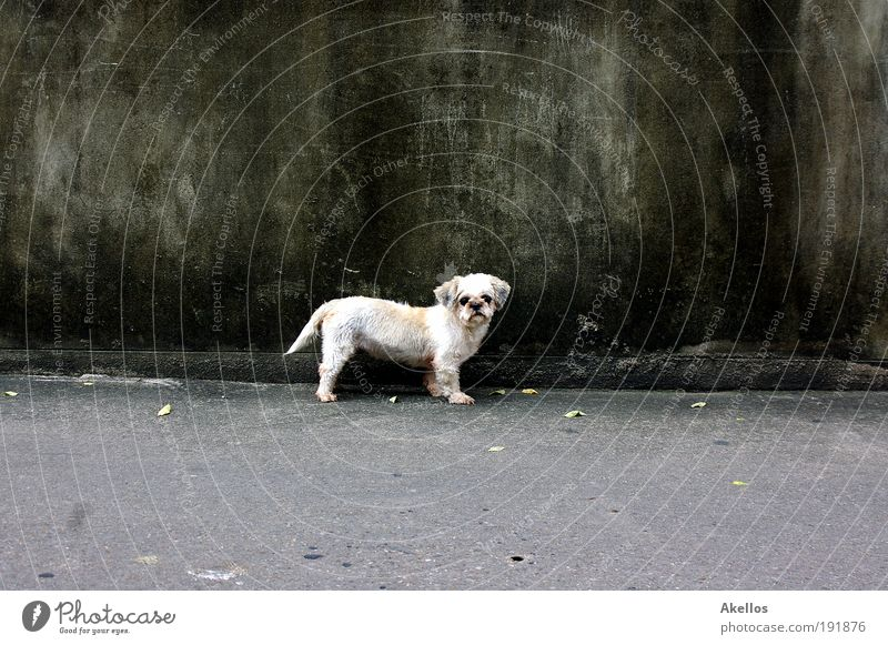 Hund vor Wand Einsamkeit Tier Hund Traurigkeit Sehnsucht Fell Neugier Haustier Hundeblick