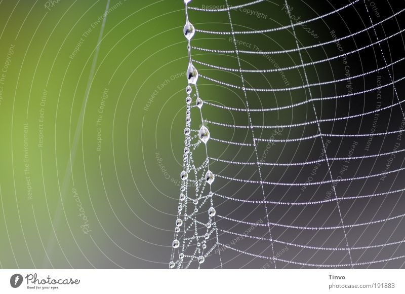 am seidenen Faden Natur grün Umwelt grau Wassertropfen Netzwerk zart Klettern Netz fangen Tau Leiter Spinnennetz Fangnetz abstrakt aufgereiht