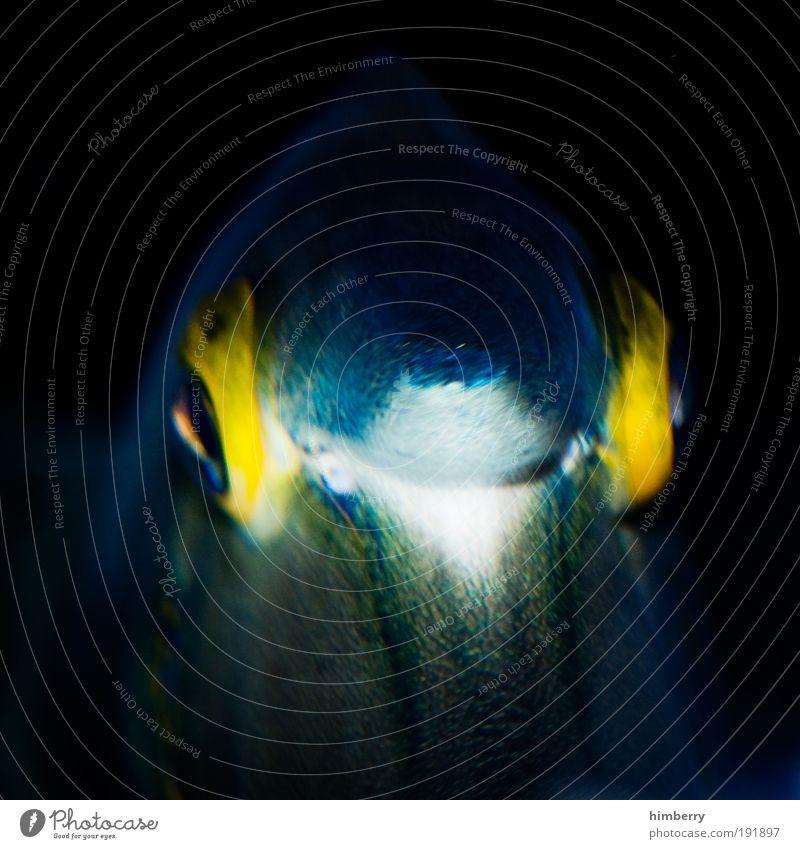 aquaman Natur Wasser schön Meer Tier gelb dunkel Fisch Coolness weich bedrohlich beobachten einzigartig fantastisch außergewöhnlich