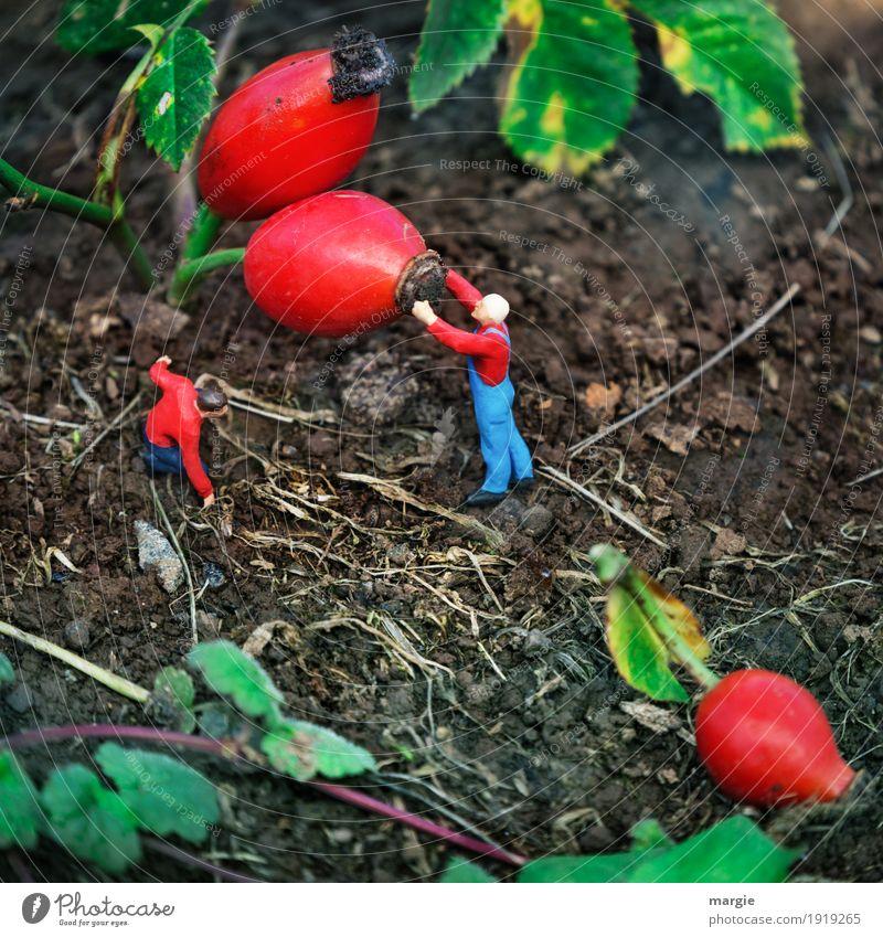 Miniwelten - Hagebutten Arbeit & Erwerbstätigkeit Beruf Gartenarbeit Landwirtschaft Forstwirtschaft Dienstleistungsgewerbe Gesundheitswesen Mensch maskulin Mann