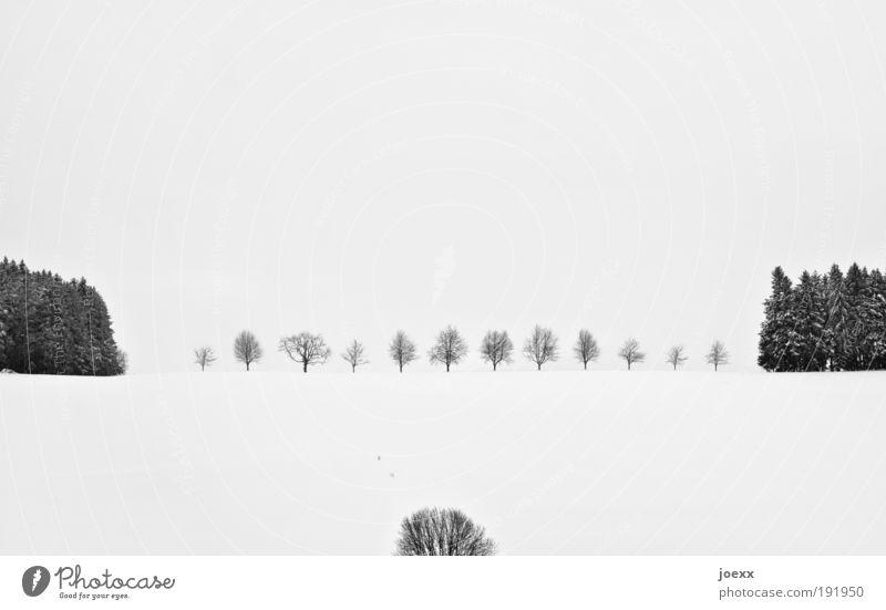 Ordnung Winter Schnee Winterurlaub Natur Landschaft Pflanze Wetter Eis Frost Baum ästhetisch Ferne kalt schön trist schwarz weiß ruhig Erholung Reihe Baumreihe