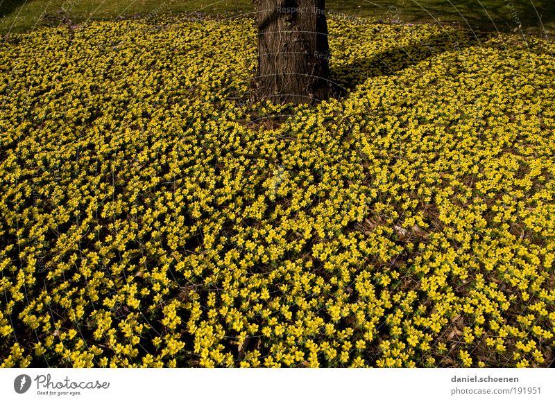 ohne Worte Natur Baum Blume Pflanze gelb Blüte Frühling Wachstum viele Baumstamm