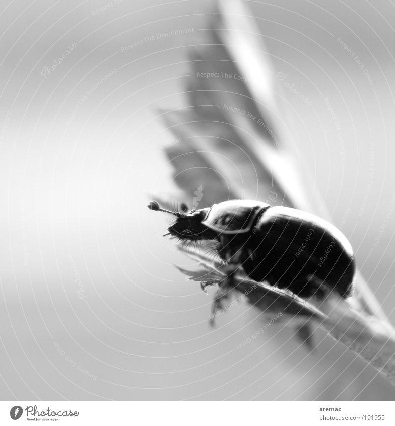 Chill Out Zone Natur weiß Blatt schwarz Tier Erholung Stimmung sitzen Käfer Insekt Makroaufnahme Schwarzweißfoto