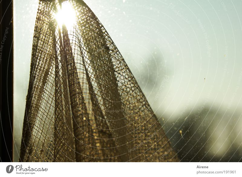 Ins Netz gegangen Himmel Sonne Fenster Stimmung Kraft dreckig Glas Hoffnung Netzwerk Dekoration & Verzierung Stoff Schönes Wetter positiv Textilien Natur