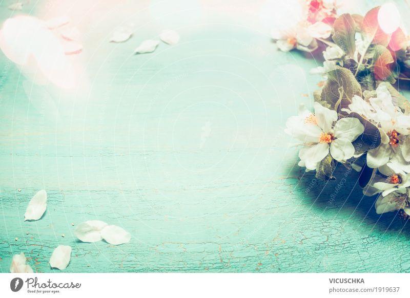 Hübsche Frühlingsblüten auf türkisblauen Hintergrund Natur Pflanze Blume Blatt Blüte Hintergrundbild Stil Garten Feste & Feiern Design rosa