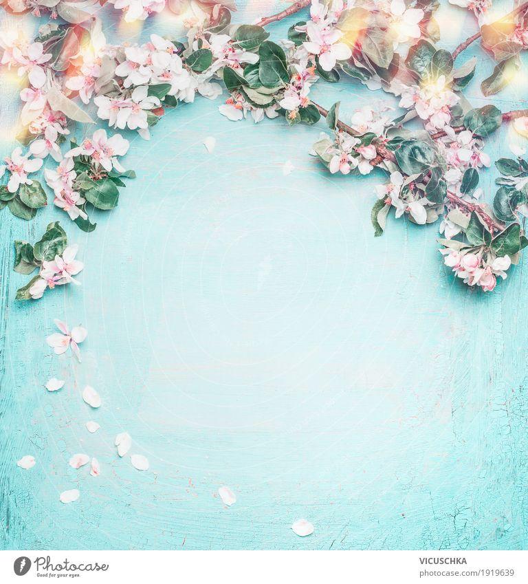 Frühling Natur Hintergrund mit schönen Blüten Pflanze blau Blume Blatt Liebe Hintergrundbild Stil Feste & Feiern Design rosa Dekoration & Verzierung elegant