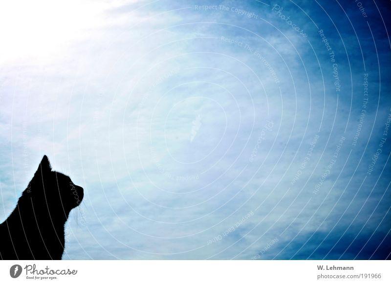 Ich schau in den Himmel... Natur blau Tier Katze maskulin einzigartig Tiergesicht Haustier Muster Perspektive