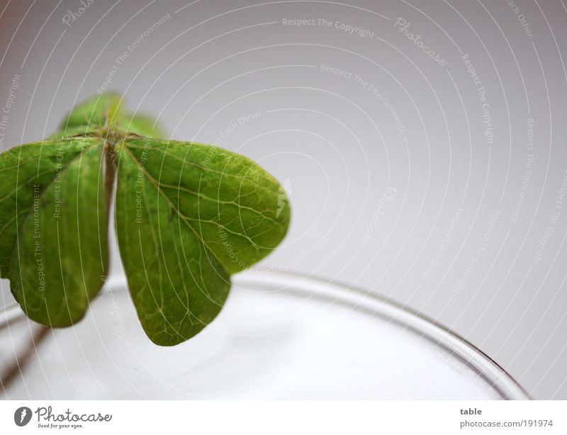ein kleines Glück... schön grün Pflanze Blatt Gefühle Zufriedenheit Hoffnung ästhetisch Wachstum Zukunft Sauberkeit rein Vertrauen Wunsch Neugier