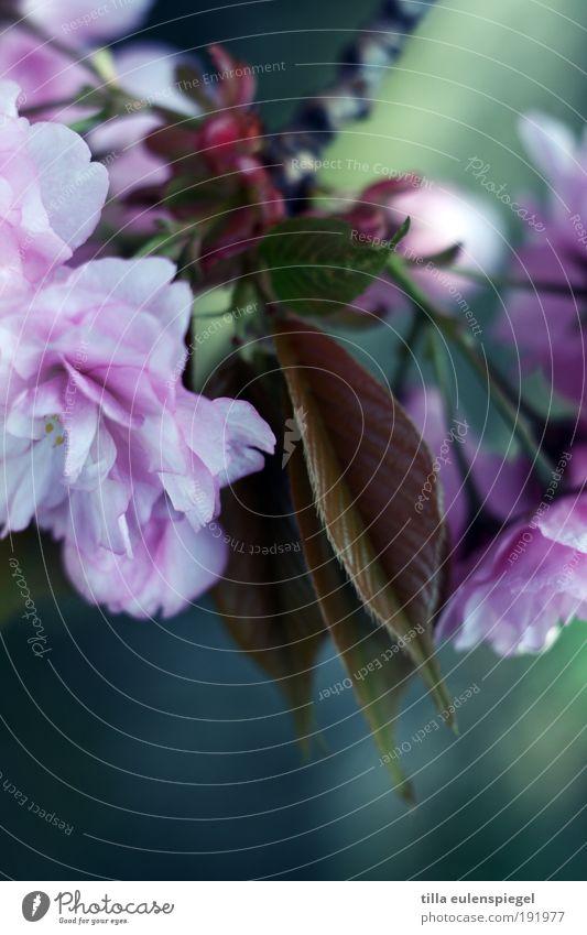 Einmal Frühling zum Mitnehmen, bitte! Natur schön Baum grün Pflanze Ferien & Urlaub & Reisen ruhig Blatt Farbe Wiese Blüte Park rosa Umwelt