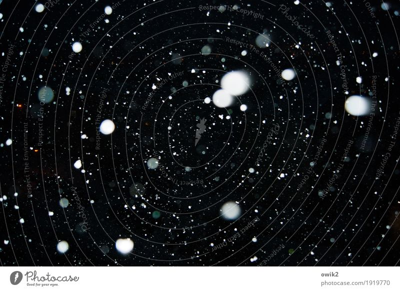 Punktestand Umwelt Natur Winter Wind Sturm Schnee Schneefall Bewegung leuchten dunkel authentisch Zusammensein glänzend viele wild blau schwarz weiß
