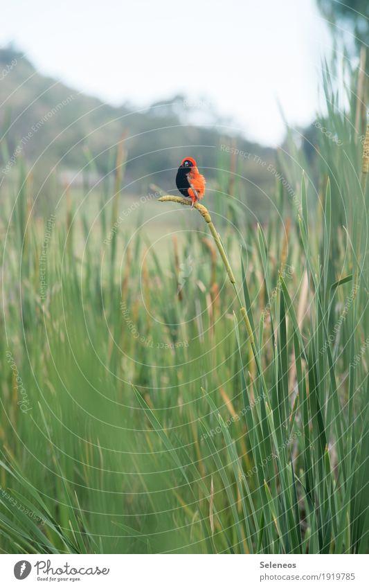 auf biegen und brechen Natur Sommer Tier Umwelt natürlich Küste klein Garten Freiheit Vogel Park Wetter Ausflug Wildtier Seeufer Schilfrohr