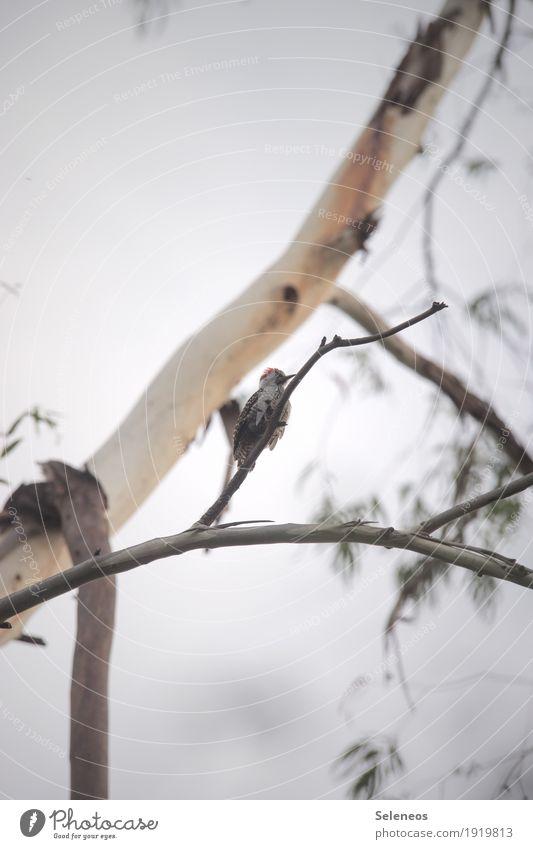 knock knock Himmel Natur Baum Tier Garten Freiheit Vogel Feld Ausflug Wildtier Flügel festhalten Tiergesicht Specht