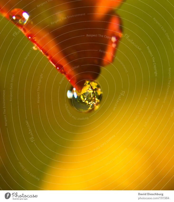 Schmuck der Pflanzen elegant Wellness Leben harmonisch Natur Wassertropfen Frühling Sommer Herbst Winter Klimawandel Regen Gewitter Baum Blatt Park Wiese Urwald
