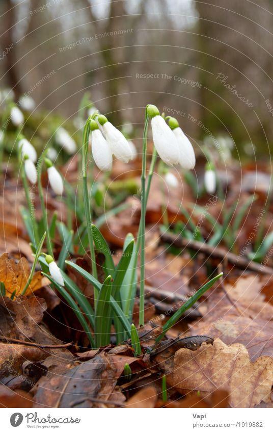Natur Pflanze Farbe grün weiß Blume Blatt Winter Wald Blüte Frühling Wiese natürlich Gras Garten braun