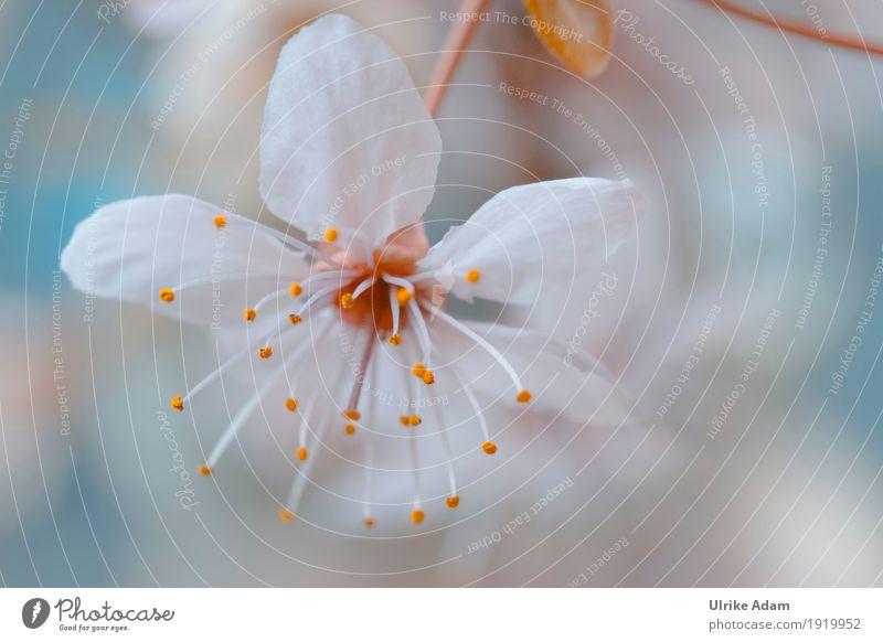 Japanische Kirschbaumblüte elegant Design harmonisch Wohnung einrichten Dekoration & Verzierung Tapete Bild Leinwand Poster Postkarte Kunst Kunstwerk Natur