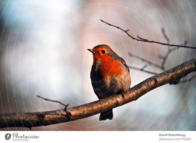 Hey, wer bist du denn? Natur blau weiß Baum Pflanze Sommer Tier Einsamkeit Winter schwarz Auge Herbst Frühling Freiheit Garten Vogel