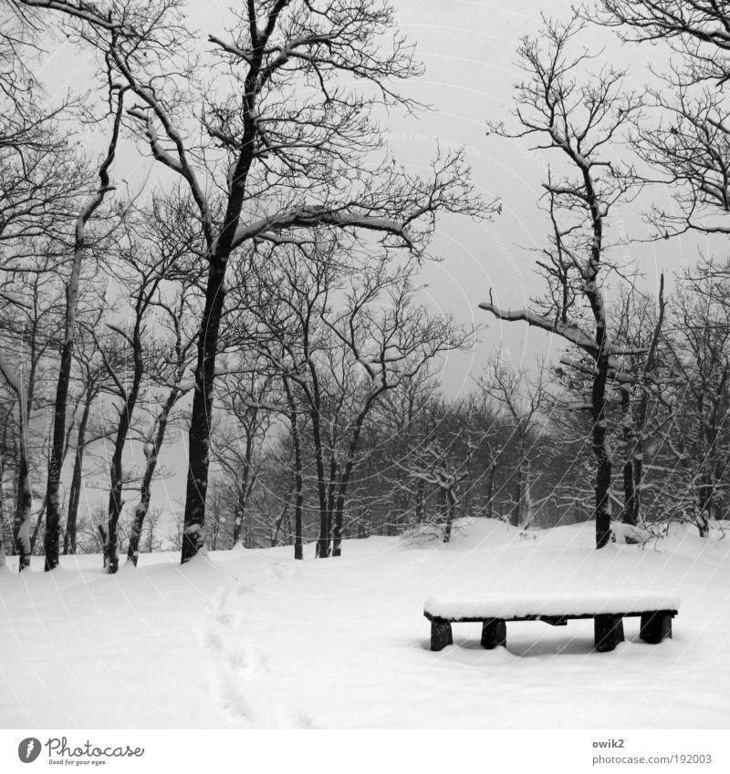Winter wunschlos Natur Himmel weiß schwarz Einsamkeit Wald kalt Schnee Erholung grau Wege & Pfade Park Landschaft Eis