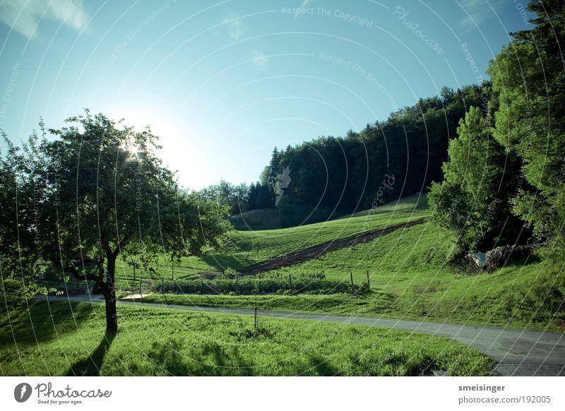 sommer Umwelt Natur Landschaft Pflanze Himmel Wolkenloser Himmel Sonne Sommer Schönes Wetter Baum Gras Sträucher Grünpflanze Wildpflanze Wiese Feld Wald
