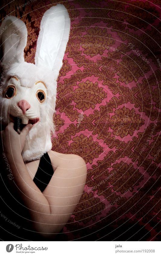 lange löffel lady Mensch feminin Frau Erwachsene lustig Hase & Kaninchen Maske Ostern Farbfoto Innenaufnahme Textfreiraum rechts Kunstlicht Licht Schatten
