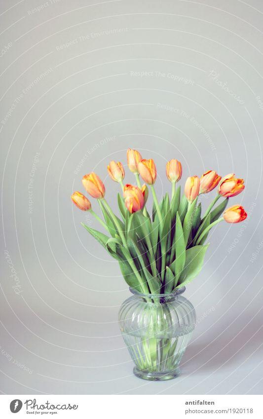 Montag Morgen Freizeit & Hobby Häusliches Leben Wohnung Valentinstag Muttertag Geburtstag Natur Frühling Blume Tulpe Blatt Blüte Blumenstrauß Blumenvase Vase