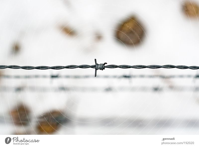 Hier kommst DU nicht rein :-( Natur Schnee Bodenbelag Stacheldraht Zaun Barriere hell weiß gefangen gefangenheit horizontal Farbfoto Menschenleer