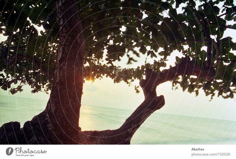 Hoffnung Wasser Himmel Baum Sonne Meer Sommer Strand Ferien & Urlaub & Reisen Ferne Freiheit Landschaft warten Horizont Insel Tourismus Sehnsucht