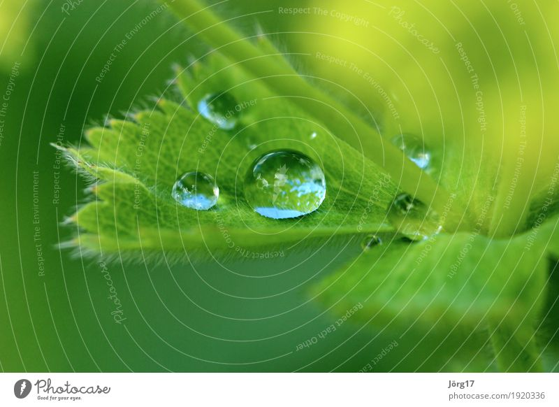 Wassertropfen auf einem Blatt Natur Pflanze Nahaufnahme Makroaufnahme Regen Tropfen Außenaufnahme