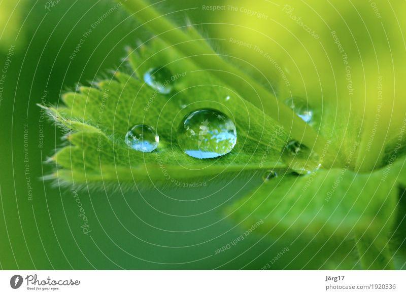 Wassertropfen Natur Pflanze Blatt