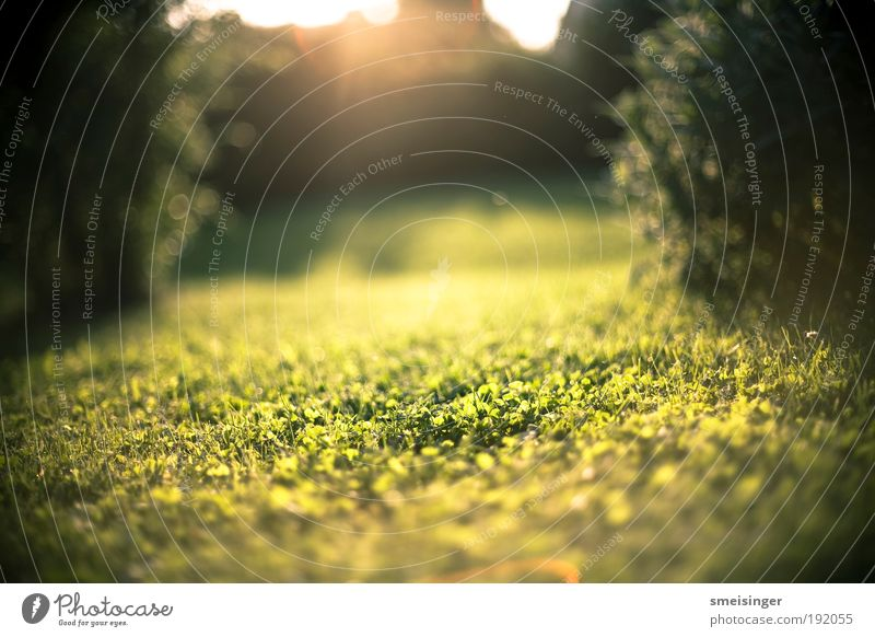 garten Natur Sonne grün Pflanze Sommer ruhig Erholung Wiese Gras Garten Glück Park Wärme Zufriedenheit Umwelt gold