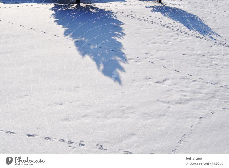 Das Winterende wirft seine Schatten voraus. Umwelt Natur Landschaft Klima Wetter Schönes Wetter Eis Frost Schnee Baum kalt Tanne Spuren Fährte Farbfoto