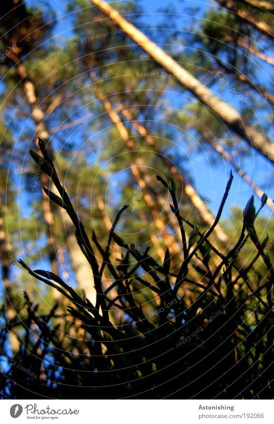 aus der Sicht eines Käfers Umwelt Natur Landschaft Pflanze Erde Himmel Sommer Wetter Schönes Wetter Baum Gras Sträucher Wald Tier Wachstum ästhetisch dünn groß
