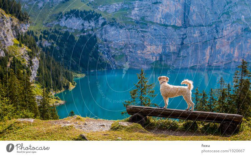 Shila geniesst die Aussicht Natur Hund blau grün Landschaft Tier Freude Ferne Wald Berge u. Gebirge gelb Glück See braun Felsen gehen