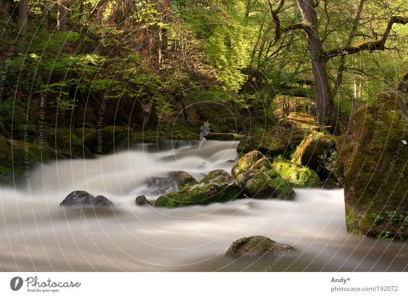 Hochwasser Natur Wasser grün Ferien & Urlaub & Reisen Frühling Landschaft Deutschland gold Ausflug Tourismus Fluss Freizeit & Hobby Schönes Wetter Bach Flussufer