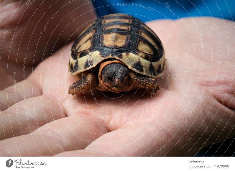 Knutschkugel Hand Finger Natur Wildtier Tiergesicht Schildkröte Schildkrötenpanzer 1 klein nah natürlich Nahaufnahme Makroaufnahme zutraulich Neugier Farbfoto