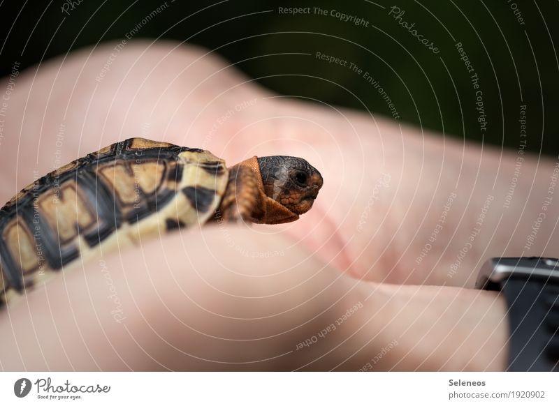 and then I fell in love Hand Finger Umwelt Natur Tier Haustier Wildtier Tiergesicht Schildkröte Schildkrötenpanzer 1 klein nah niedlich Farbfoto Außenaufnahme