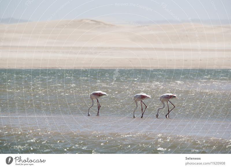 drei auf Nahrungssuche Ferien & Urlaub & Reisen Sommer Wasser Sonne Meer Erholung Tier ruhig Ferne Strand natürlich Küste Freiheit Vogel Tourismus Horizont