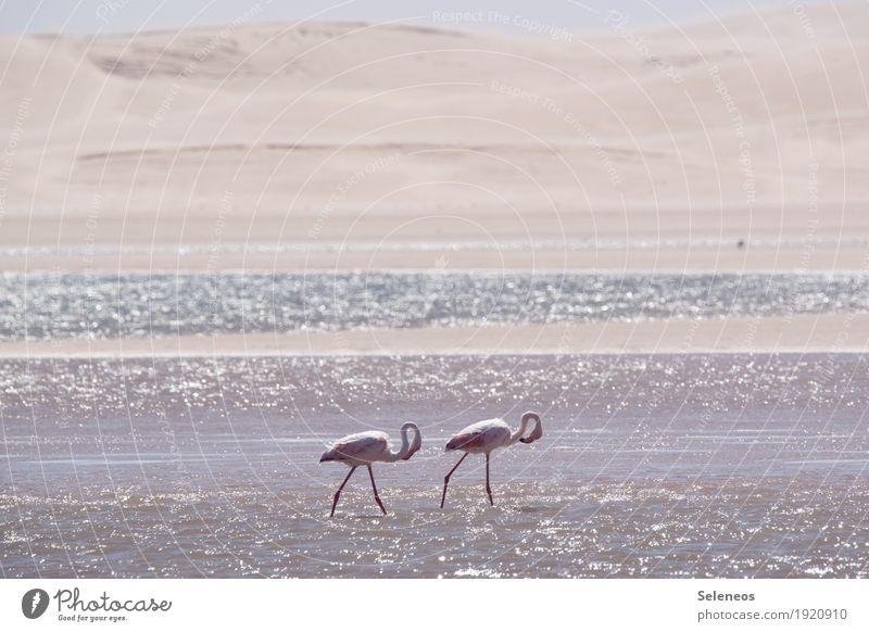 Morgenrunde Ferien & Urlaub & Reisen Tourismus Ausflug Ferne Freiheit Sommer Sommerurlaub Strand Meer Umwelt Natur Schönes Wetter Küste Seeufer Flussufer Wüste