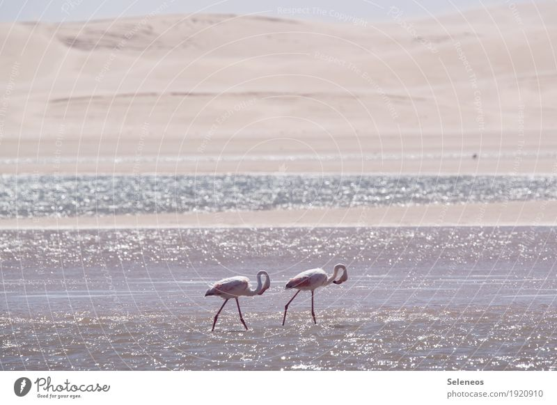 Morgenrunde Natur Ferien & Urlaub & Reisen Sommer Meer Tier Ferne Strand Umwelt Küste Freiheit Vogel Tourismus Ausflug Wildtier Schönes Wetter Seeufer