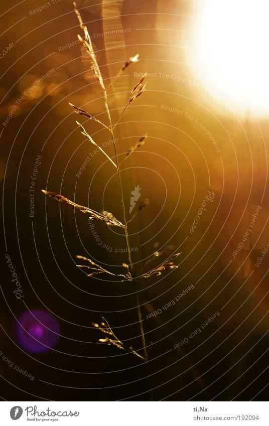 Licht an Umwelt Natur Landschaft Tier Sonne Sommer Herbst Klima Schönes Wetter Pflanze Gras Sträucher Wiese Feld leuchten Wachstum hell schön Stimmung