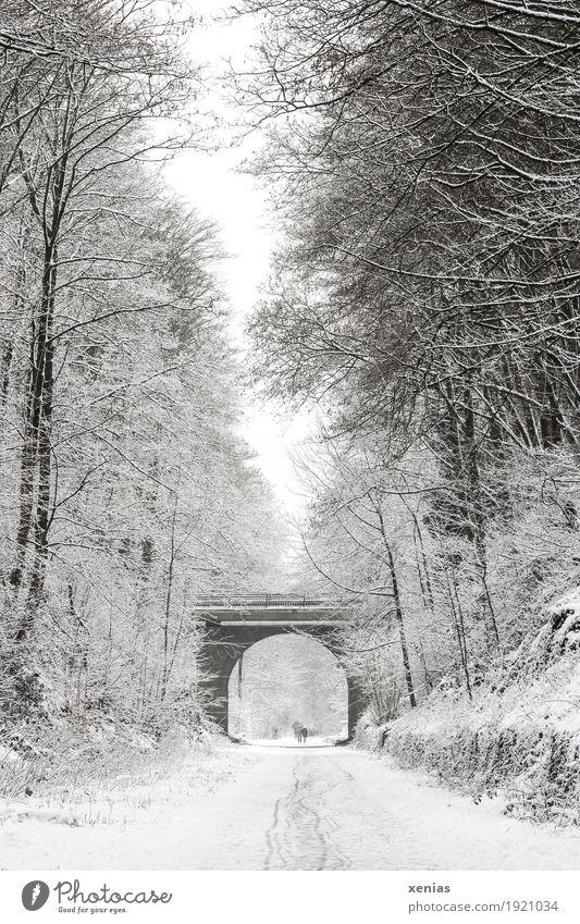 Winterlicher Weg mit Bäumen und Brücke Wege & Pfade Schnee Baum Fußgänger wandern hell braun schwarz weiß Spazierweg Bogen Tente Starke Tiefenschärfe