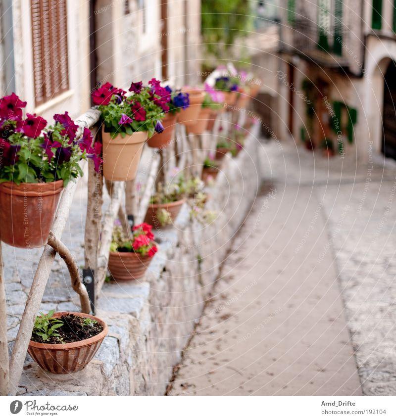 Blumengasse Ferien & Urlaub & Reisen Stil Hintergrundbild Ausflug Garten Dorf unten Balkon Terrasse Pflanze Mallorca Spanien Gasse Textfreiraum Flair